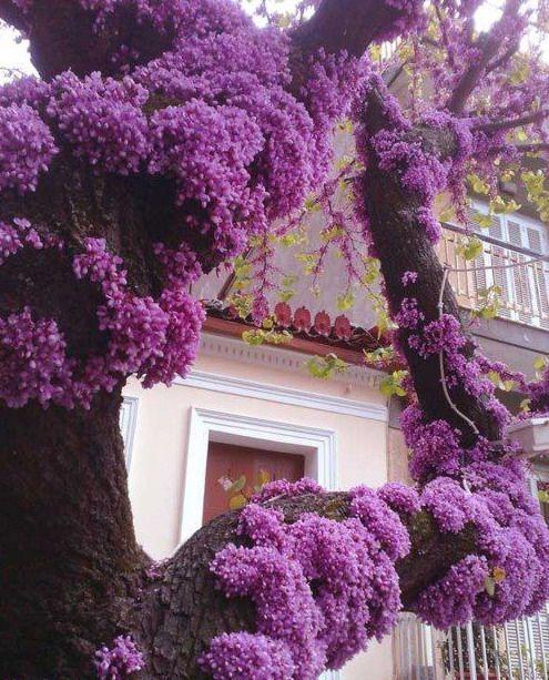 Unusual House Plants