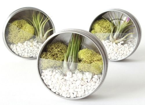 terrarium craft idea - Google Search