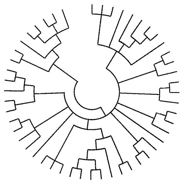 evolutionary phylogenetic tree for a tattoo