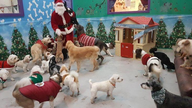 https://mur.tv/wp-content/uploads/2016/12/1-761.jpg Санта к нам приходит! Как собаки из приюта подарки от Санта Клауса получали - https://mur.tv/2017/01/01/santa-k-nam-prixodit-kak-sobaki-iz-priyuta-podarki-ot-santa-klausa-poluchali/