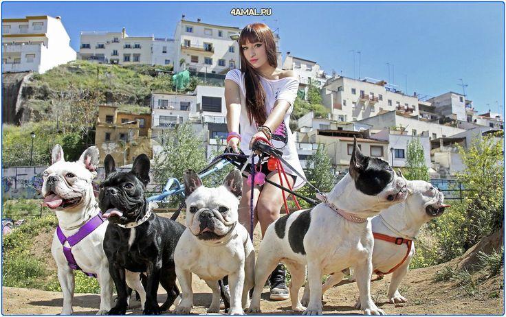 Девушка и собаки