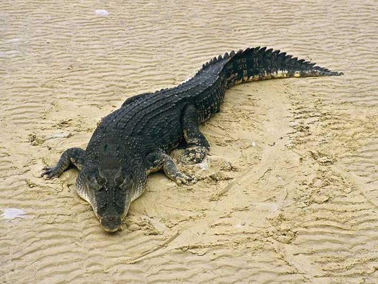 Lohabarrack Salt Water Crocodile Sanctuary in Andaman and Nicobar