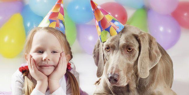 ¿Cómo calcular la edad de tu perro?
