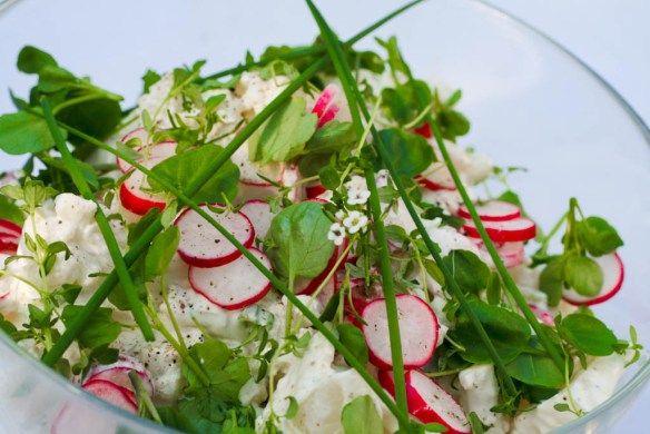 Cremet blomkålsalat med sommergrønt 1