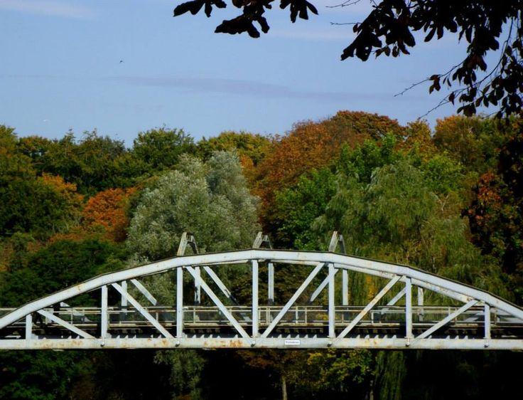 Trees In Colour. Pyttebron Ängelholm. #Ängelholm #Sweden #Autumn #Pyttebron