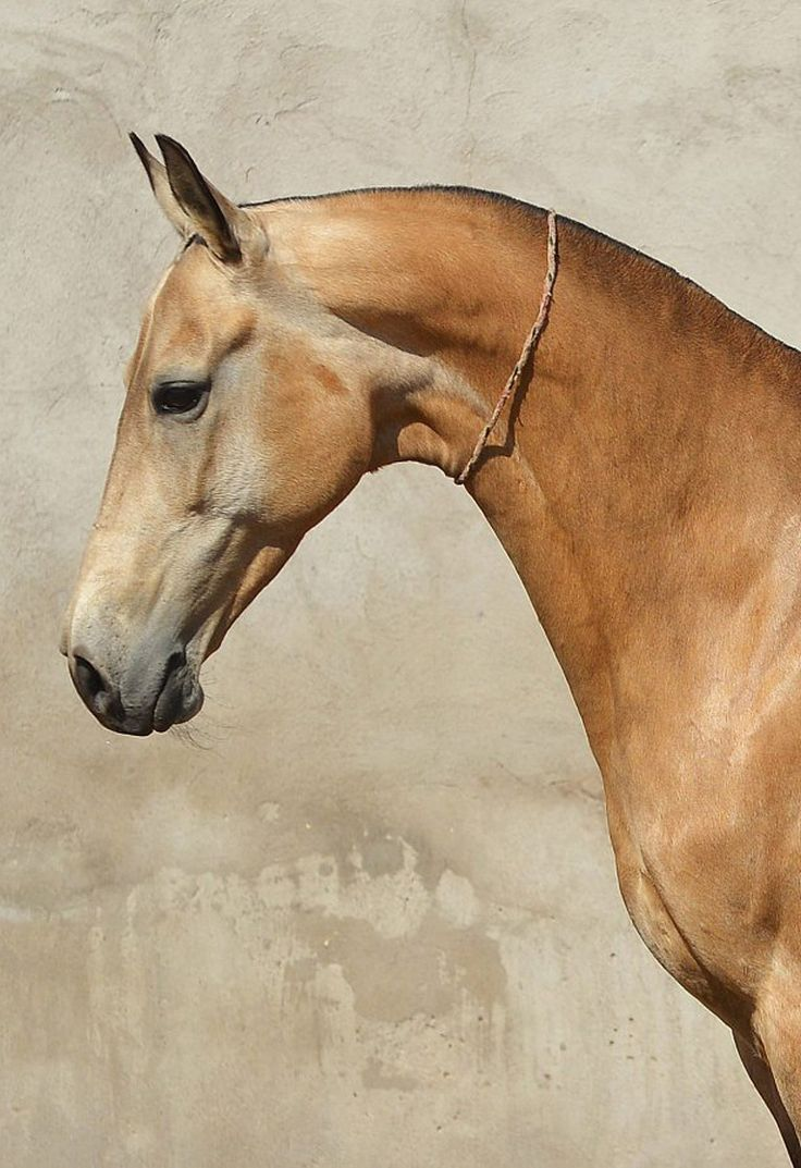 Best 20 Horse Head Ideas On Pinterest