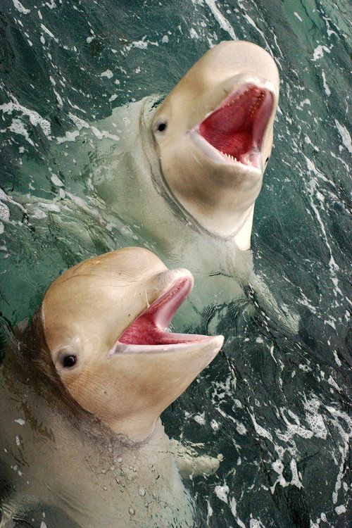 I think these are beluga whales but they look like aliens!
