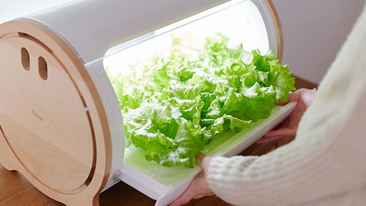 There Are Now Multiple Ways To Grow Lettuce In Your 400 x 300