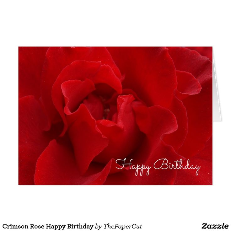 Crimson Rose Happy Birthday Card - $3.75 - Crimson Rose Happy Birthday Card - by #RGebbiePhoto @ #zazzle - #Rose #Red #Flower - Red Velvet Rose, blooming on the vine. Soft velvet petals in deep ruby and crimson red shades. The color of passion and romance. Happy Birthday text inside can be changed.