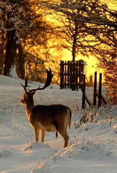 Deer At Sunset