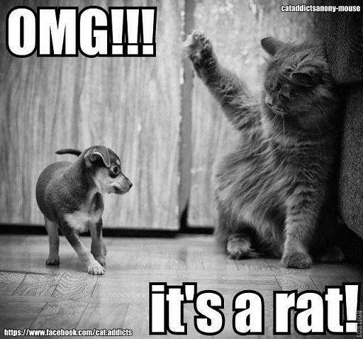 More Funny Stuff via Pinterest Humor