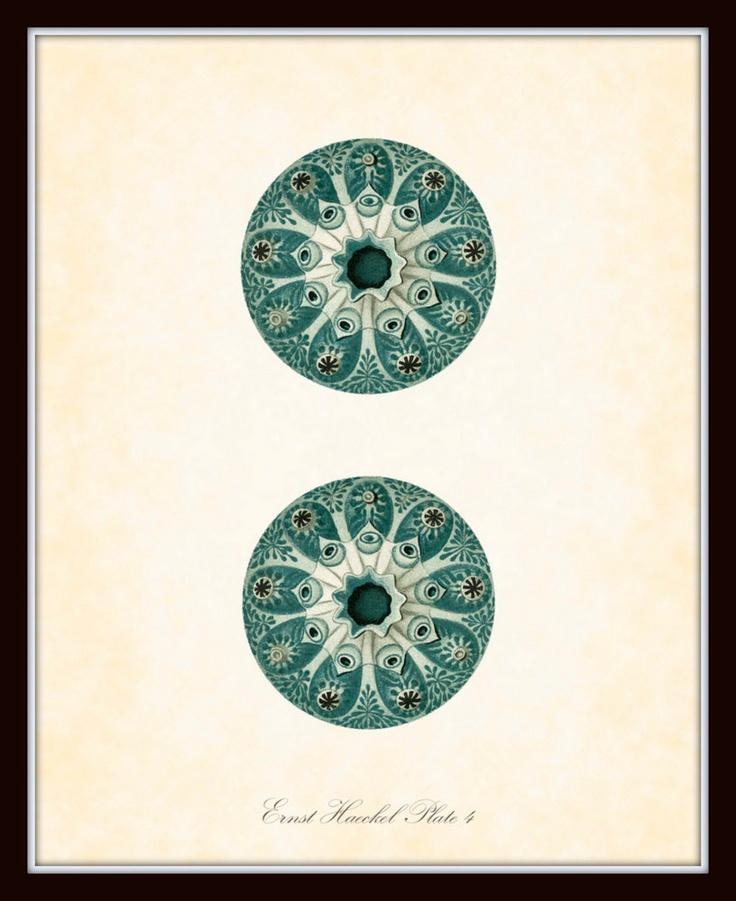 Vintage Ernst Haeckel Sea Life Series Plate 4 - Natural History Art Print 8 x 10 - Sea Plants - Fantasy Sea Life. $10.00, via Etsy.