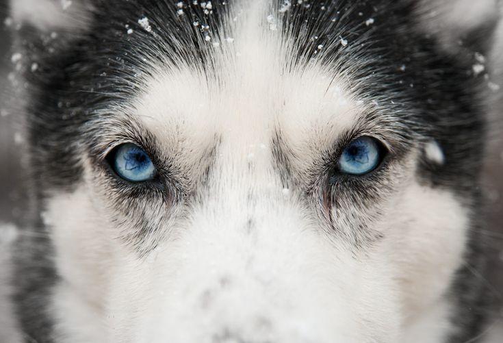 194 best Eyes! Eyes! images on Pinterest | Beautiful eyes ...