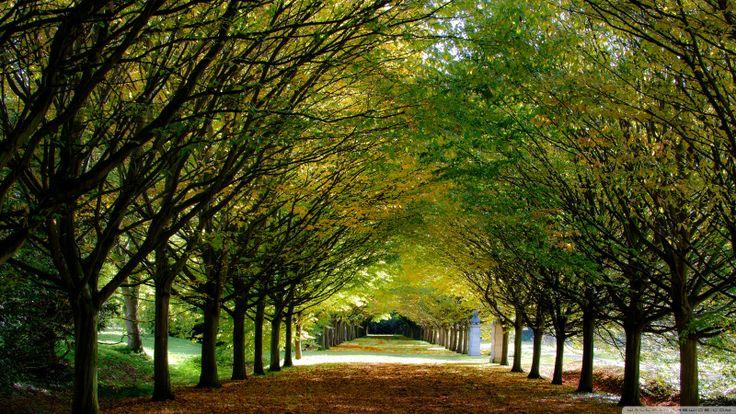 autumn anglesey abbey / Cambridgeshire-England