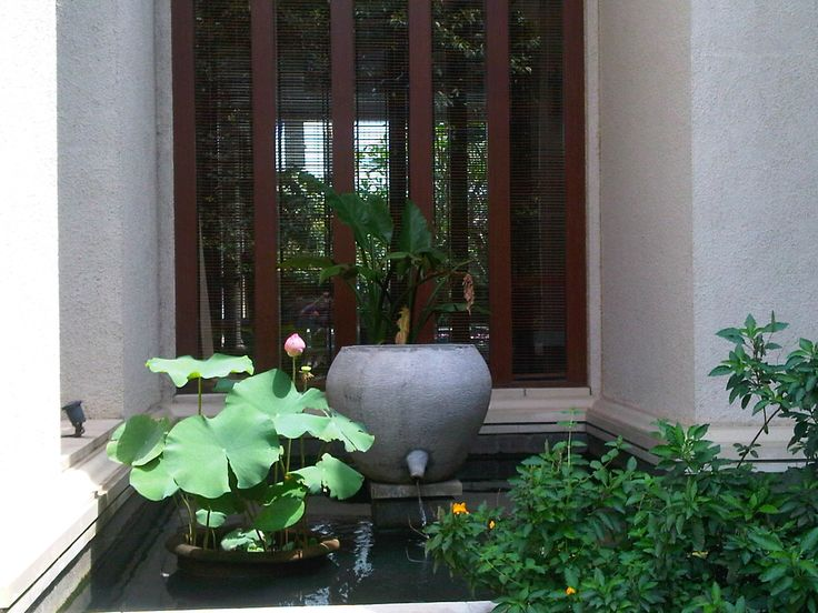 Our Front-Left Koi pond