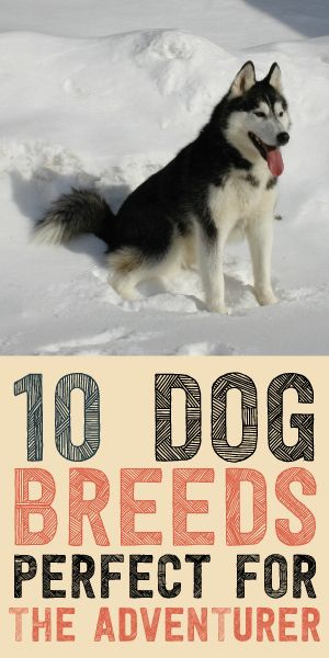 10 Dog Breeds Perfect For The Adventurer!