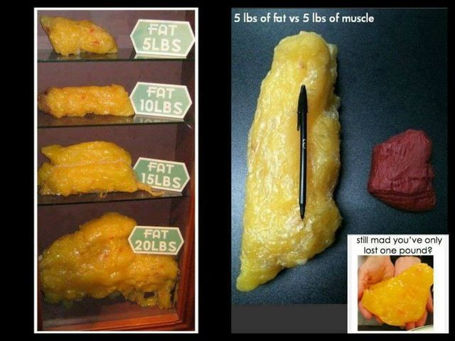 what does 16 lbs of fat look like - Google Search ...