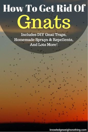 3 Gnat Traps, 2 Gnat Sprays & A Gnat Repellent To Try. Full post here: https://knowledgeweighsnothing.com/get-rid-of-gnats-quickly-gnat-trap/