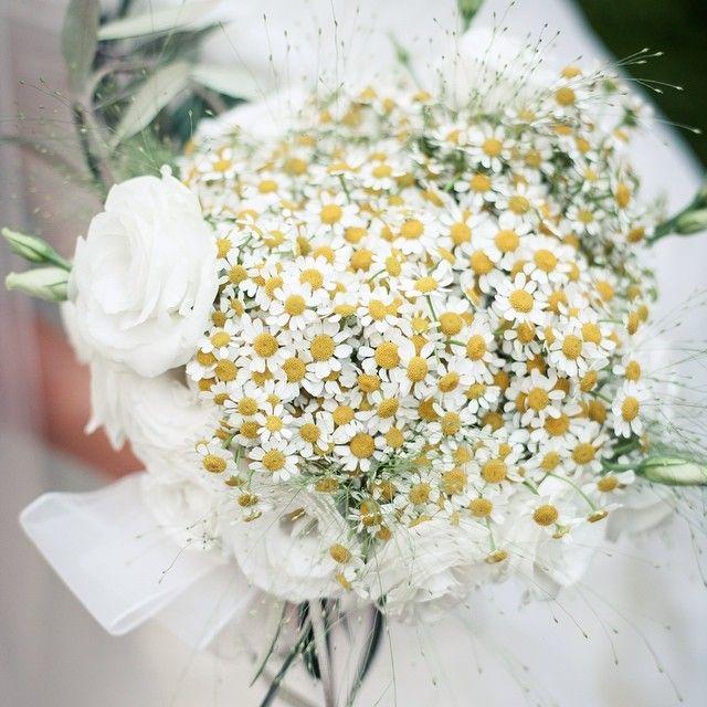 #EnzoMiccio Enzo Miccio: Ecco la mia idea di bouquet country chic: camomilla, rami di ulivo e candide corolle di lisianthus, il tutto avvolto da leggera organza bianco seta #wedding #enzomiccio #bouquet #love #weddings #flowers #weddingflowers #weddingbouquet #roses #weddingplanner #smile #elegance #magic #luxurywedding #topwedding #countrychic #specialevent #specialmoment #specialwedding