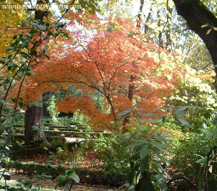 19 mejores im genes sobre rboles arbustos colores for Arbustos con flores para jardin