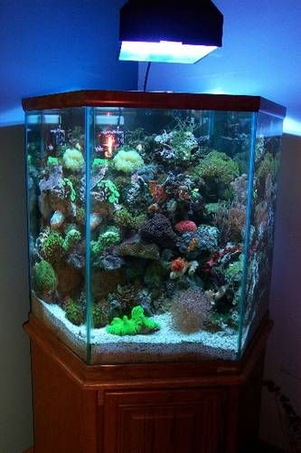 Hexagon fish tank for sale woodworking projects plans for Hexagon fish tank with stand