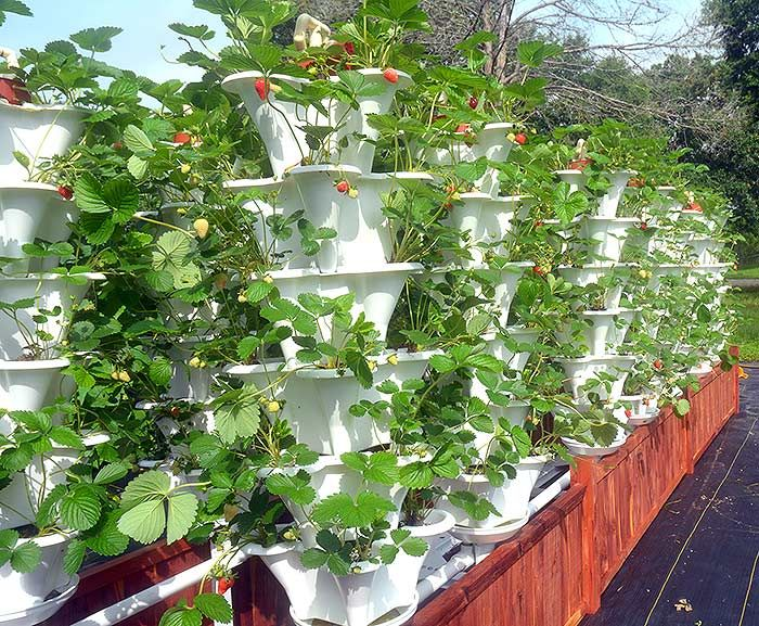 Grow 600 Plants in 36sqft Hydroponic Vertical Garden System