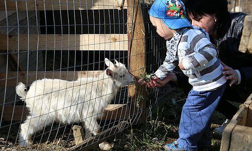 Élményparkunk területén több helyszínen, természetes környezetben várják régi és új barátaink a gyerekeket. Mint ahogy a kezdetektől, úgy idén is célunk maradt, hogy a hozzánk érkező gyermekek közelebb kerüljenek a természethez és azon belül megismerjék az állatvilágot.