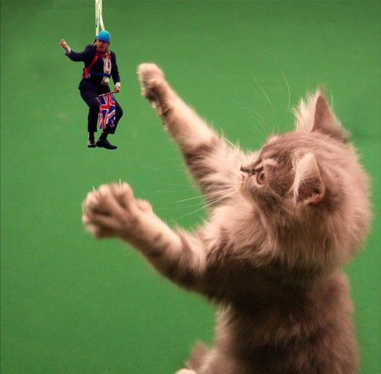 Kitten playing with #dangleboris (Boris Johnson gets stuck on a zip wire: the Photoshop parodies - Telegraph)