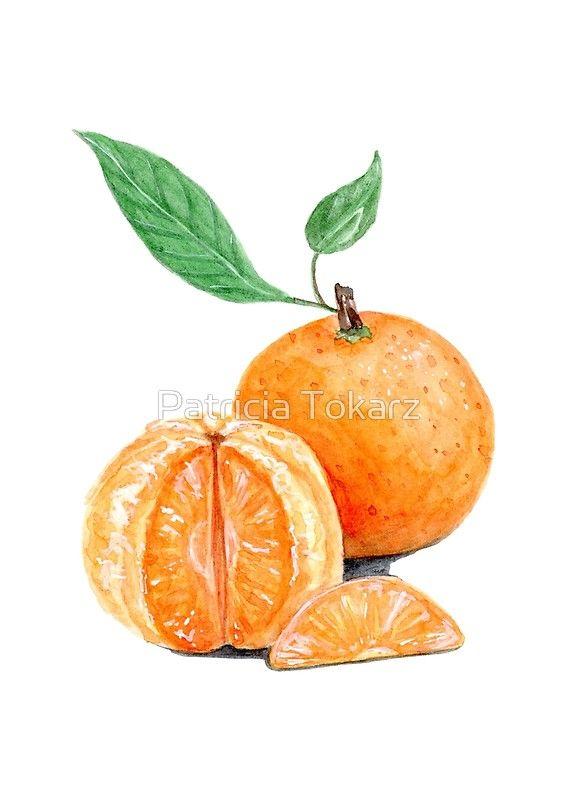 Mandarine Orange Fruit Food Foodillustration Watercolour
