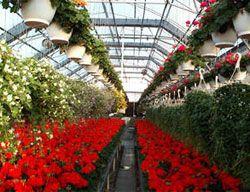 Joliet Junior College Greenhouse Joliet, Il