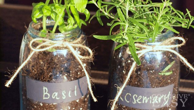Natural Fertility Supplements: 6 Herbal Supplements