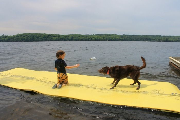 Wateraft with dogs