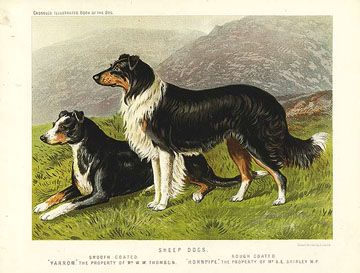 Anglo Saxon Dog Breeds