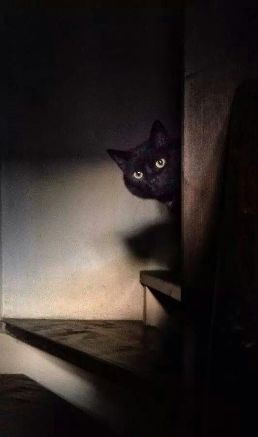 #black #cat                                                                                                                                                                                 Plus