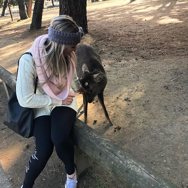 And today we went to a Deer Park in Nara. This one was friendly - head rubs for the little deer