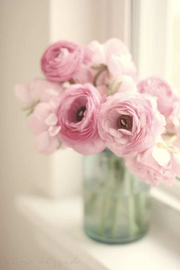 exquisite photography of these gorgeous Ranunculus can be found at Lara's blog, Air Kissed