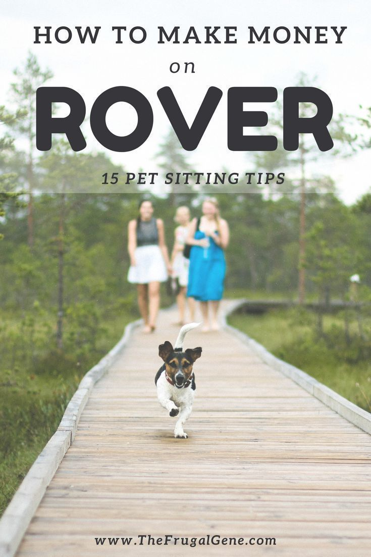 Start Your Own Pet Sitting Business On Rover And Earn Extra Money At Home Get 15 Unique Rover Pet Sittin Dog Sitting Business Pet Sitting Business Dog Daycare