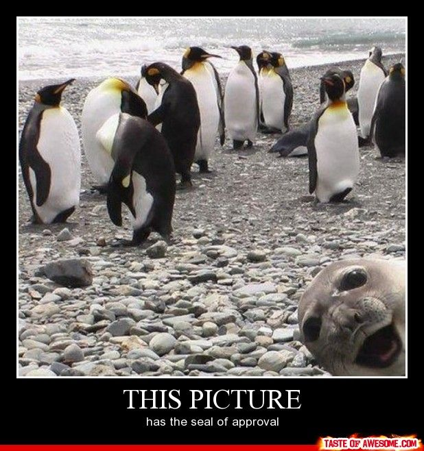 : Aptenodyt Patagonica, King Penguins, Animal Photo, Sea Lion, Photo Bombs, Funny Animal, Seals Photobomb, Photobombs, Sealion