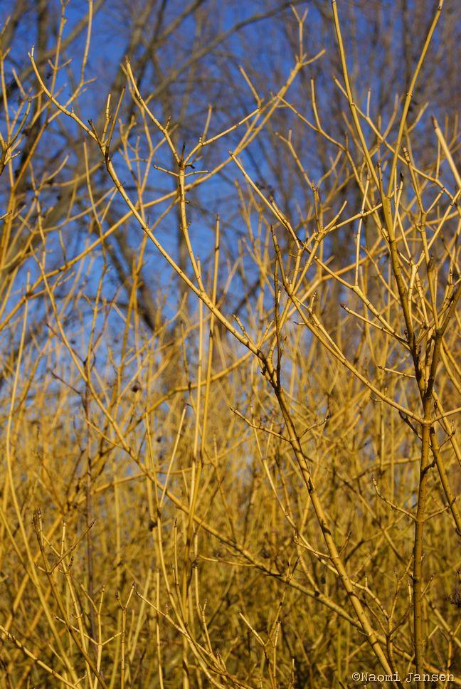 10) Golden Branches
