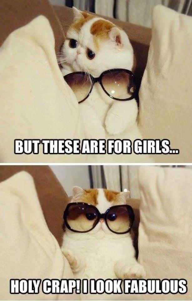 Lol ohhhh kitty