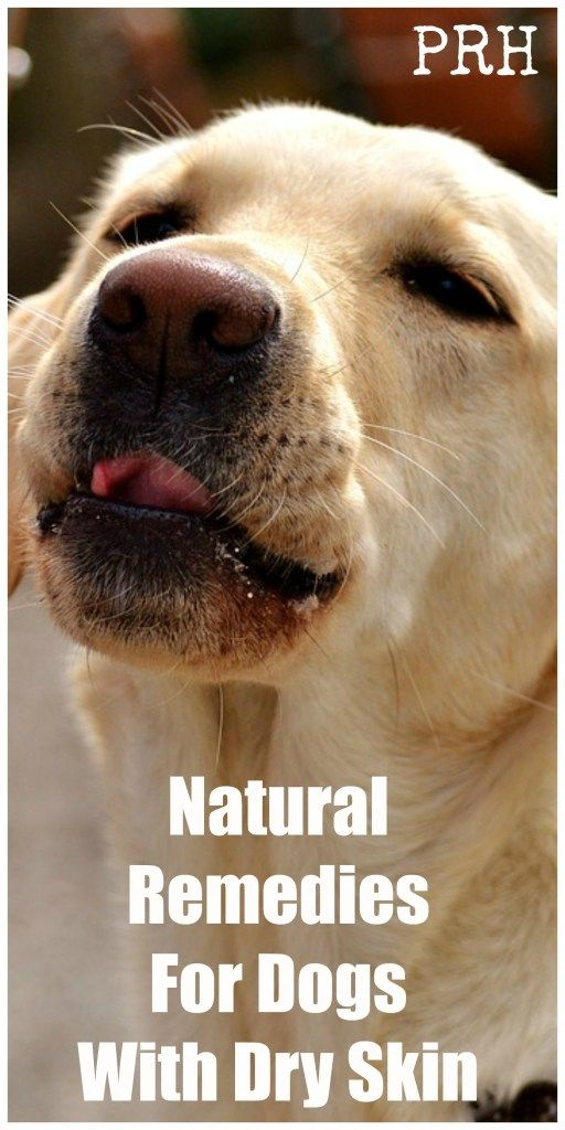 Natural Remedies For Dogs With Dry Skin Dogs And Cats Pinterest
