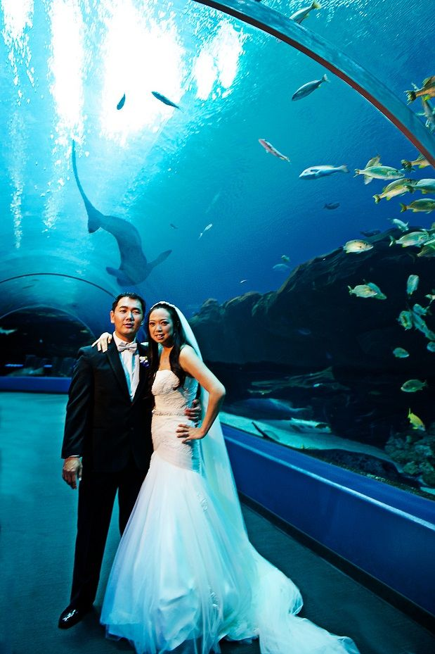 cool wedding shot ideas%0A Unique Wedding Ideas  Aquarium Venues  Photos  Invitations   u     Tips