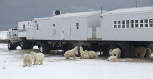 Mau Menginap Di Hotel Yang Dikelilingi Beruang Kutub? | 15/01/2015 | SolusiProperti.com - Tundra Lodge Rolling Hotel yang terletak di Manitoba, Kanada pasti akan akan membuat liburan anda jadi sangat menyenangkan. Kenapa? Simak alasannya di bawah ini! Dituliskan Dailymail, ... http://news.propertidata.com/mau-menginap-di-hotel-yang-dikelilingi-beruang-kutub/ #properti #hotel