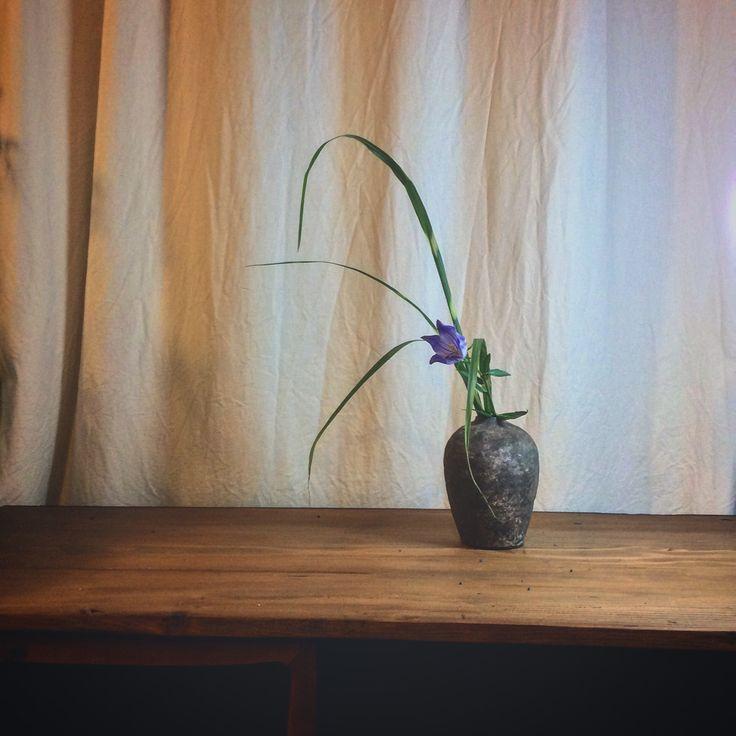 Container: Shigaraki ware Material: Bellflower and Japanese pampas grass  桔梗と薄  信楽焼花入に  #花 #いけばな #flower #ikebana #art