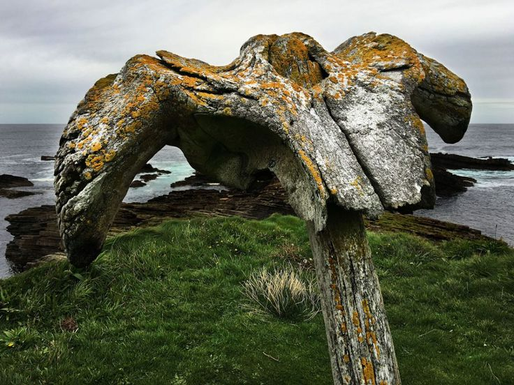 The Birsay Whalebone is a vertebra of a vast and long dead mammal from the front. From the back it's a bird of prey zoning in on its next meal. For me, its twin aspects are both repellent and enthralling. Located on Mainland, Orkney, I know that all paths will lead to Birsay when I return there in January.