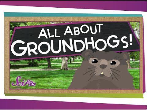 Groundhog Day Videos - Simply Kinder