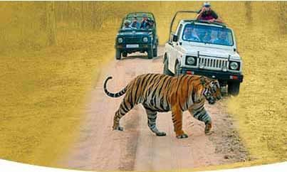 If your are fond of wildlife, then Cobett adventure tour packages are simply for you. Enjoy a Corbett adventure tour to explore the rich flora & fauna and make the most of your India wildlife tour.