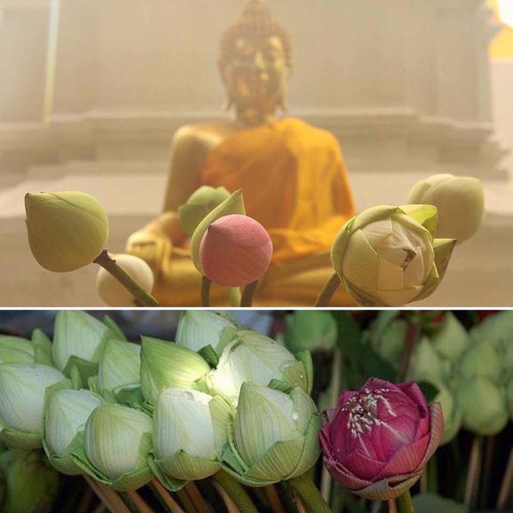 De lotus heeft in het hindoeïsme en het boeddhisme grote betekenis. De bloem symboliseert goddelijke geboorte en zuiverheid. De lotus is het attribuut van de bodhisattva Samantabhadra. Ook de hindoe-god Vishnoe wordt meestal afgebeeld met een lotusbloem. Godinnen voorgesteld als goedgunstige partner van een god houden vaak een lotus vast. Godheden, boeddha's en bodhisattva's staan of zitten meestal op een lotustroon: een voetstuk in de vorm van een open lotusbloem.
