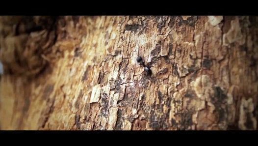 Are ants bad for a tree? If a tree is not dangerous and is more than 25 feet from the house there is no need to worry about carpenter ants other insects or fungi that is attacking the dead wood. Occasionally a dead area will hollow out and start holding water. This doesn't hurt the tree but will breed mosquitoes.