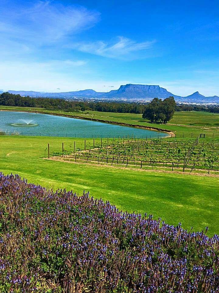 View van De Grendel wine farm and restaurant